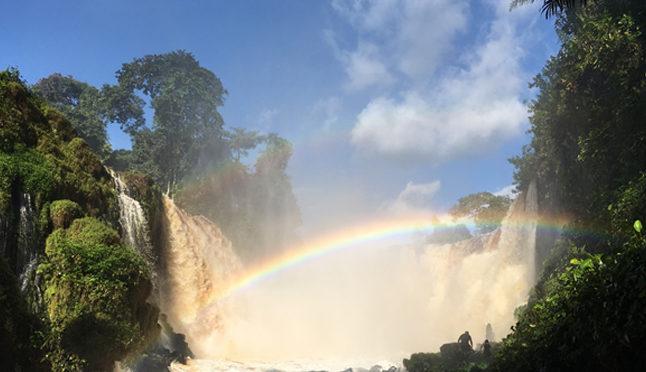 Mon coup de cœur : le parc national d'Ivindo au Gabon